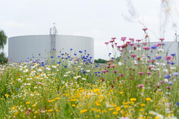Volkswagen Slovakia dokáže vyčistiť každý deň odpadovú vodu v objeme jedného olympijského bazéna